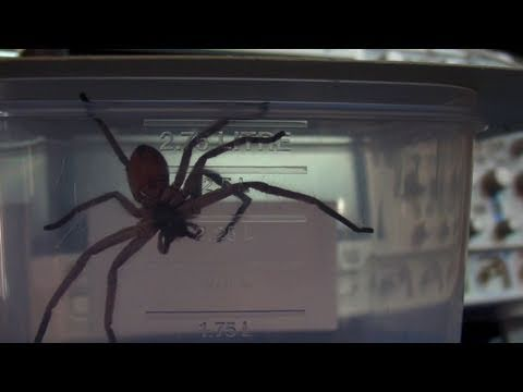 EEVblog #152 – Jurassic Spider